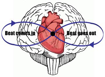 brain heart time loop variable