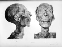 mummified head of ramesses