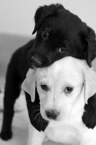 black and white dogs