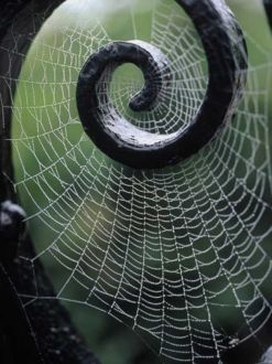 sacred geometry spiral spider web